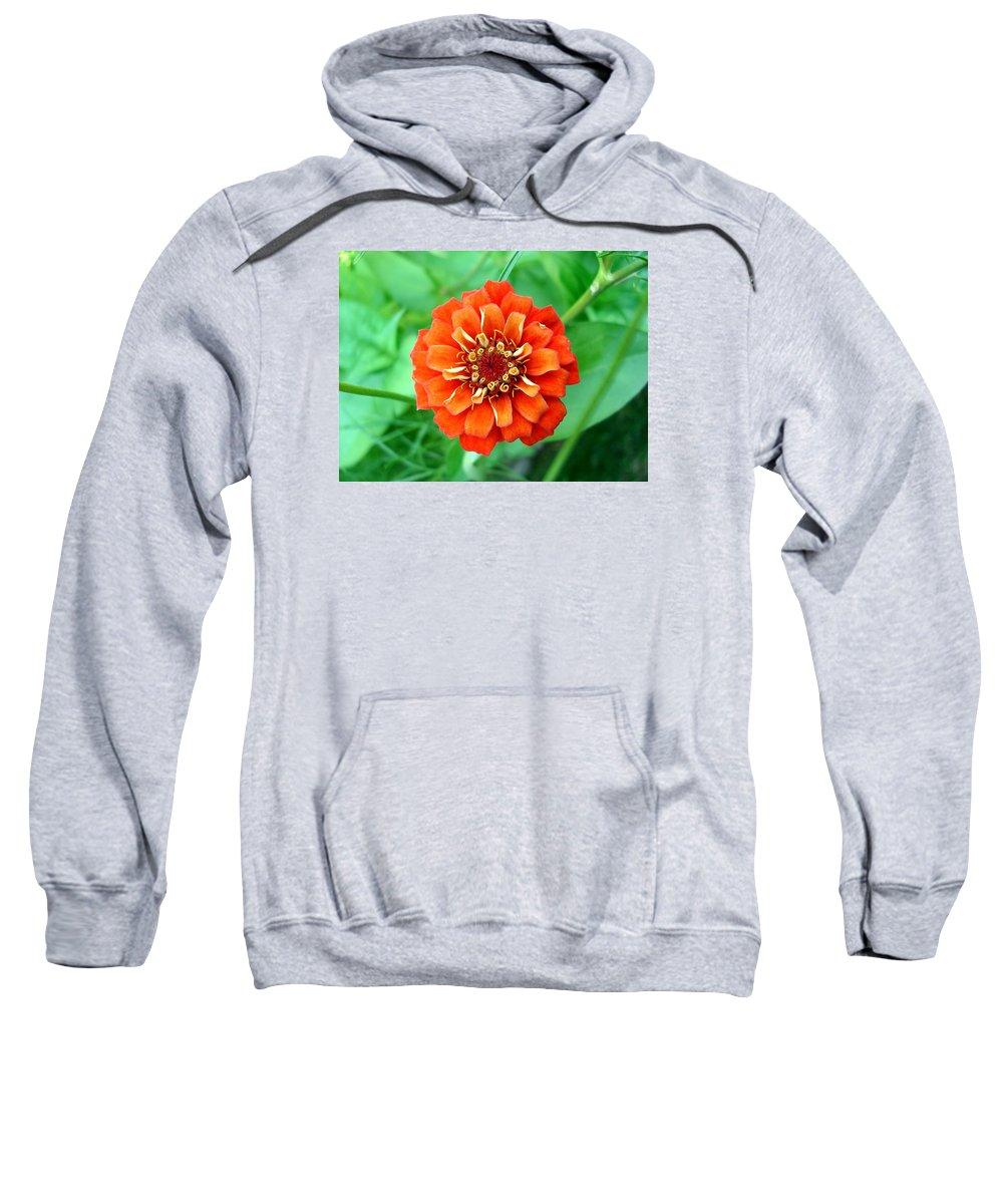 Dahlia Flowers Sweatshirt featuring the photograph Nepal Orange 2 by Nelson F Martinez