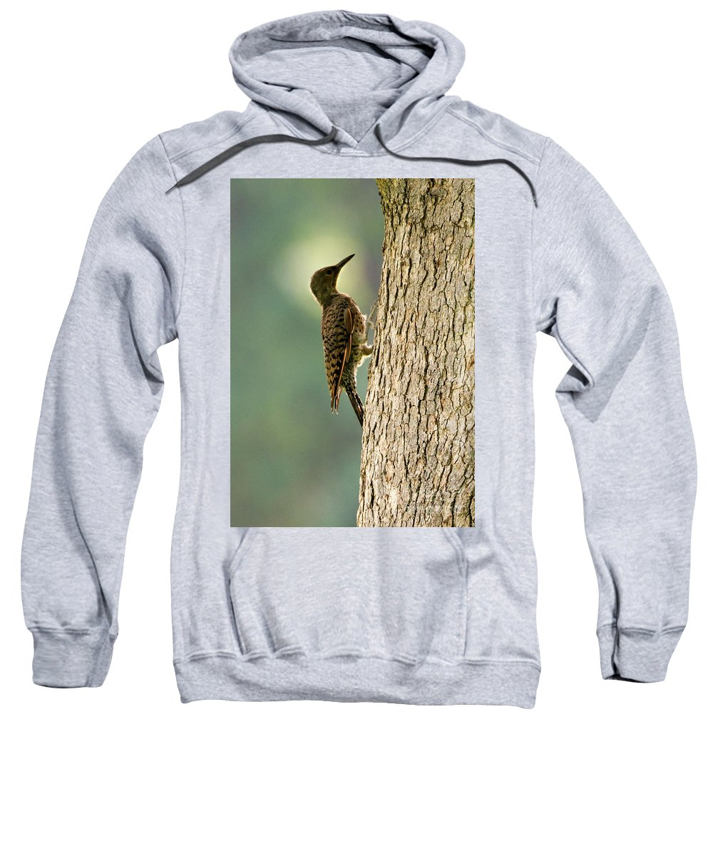 Northern Flicker Sweatshirts