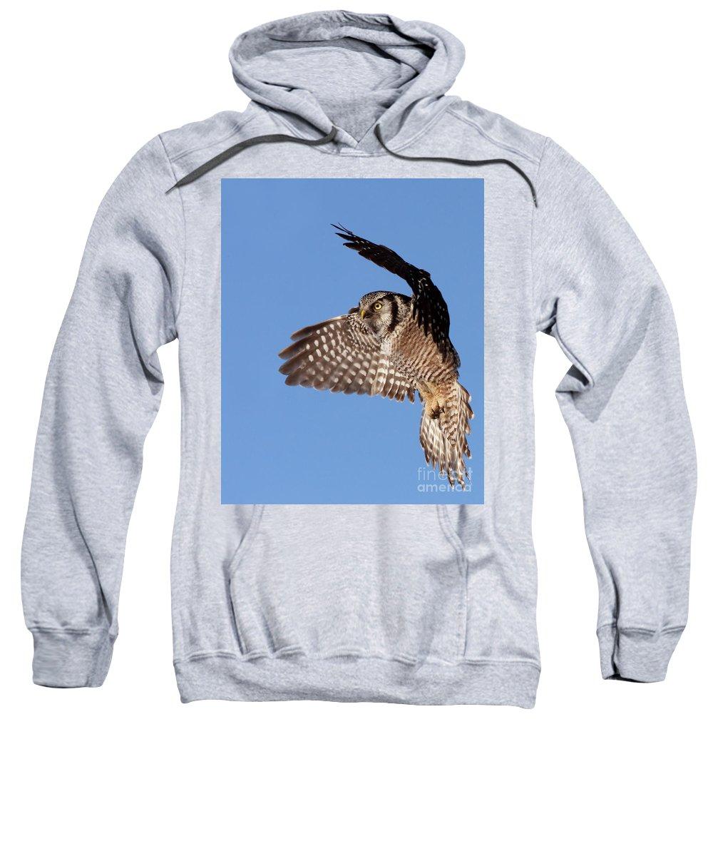 Animal Sweatshirt featuring the photograph Northern Hawk Owl by Mircea Costina Photography