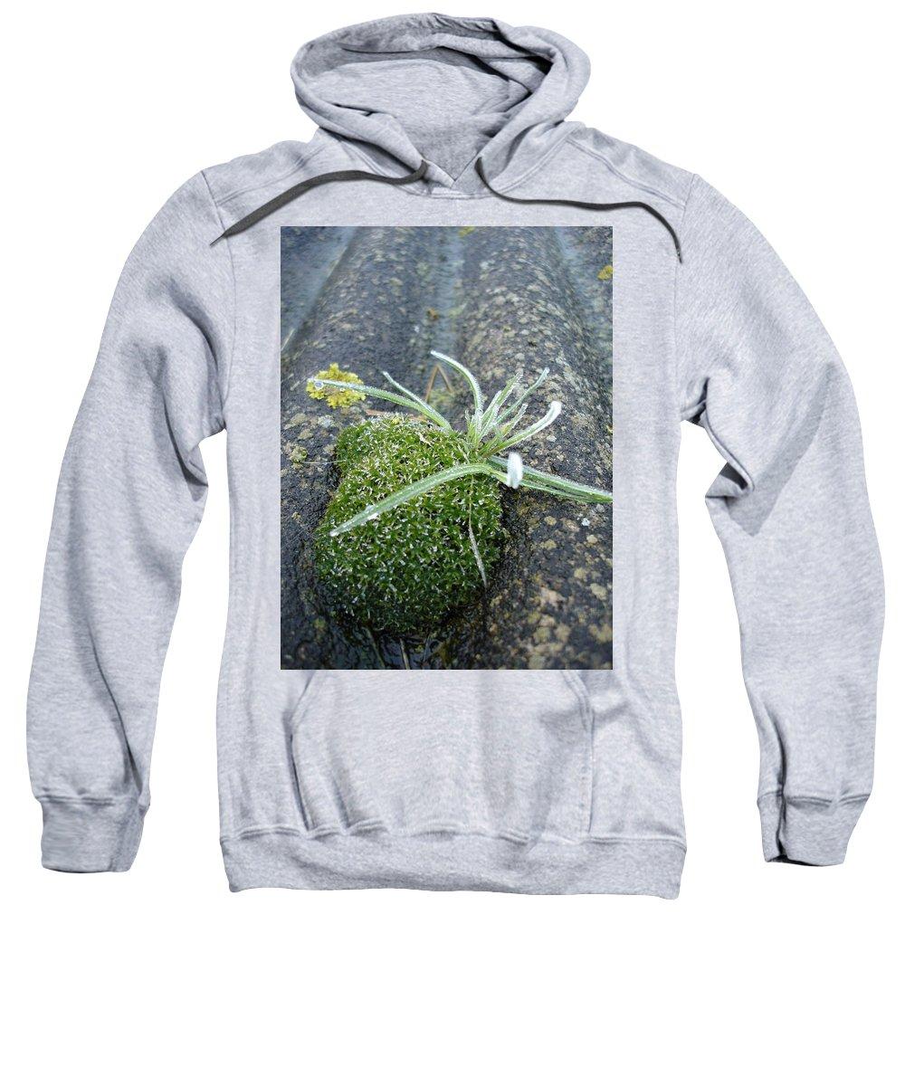 Green Sweatshirt featuring the photograph Not Quite A Roof Garden by Susan Baker