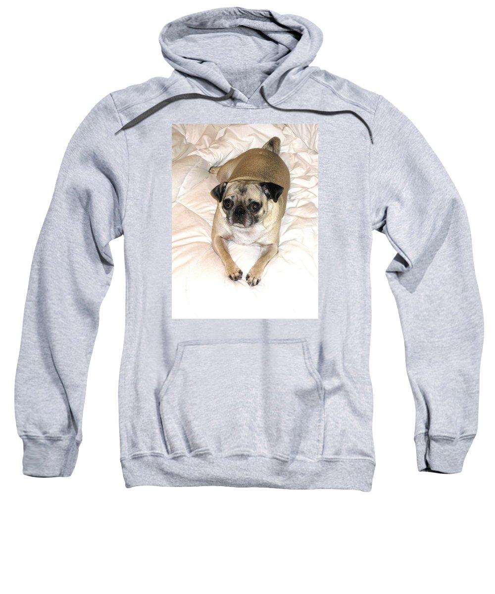 Dog Sweatshirt featuring the photograph Not Sleepy Yet by Nico Gozal