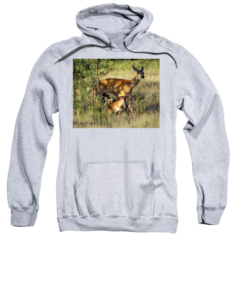 Deer Sweatshirt featuring the photograph Nursing Fawn by Marty Koch