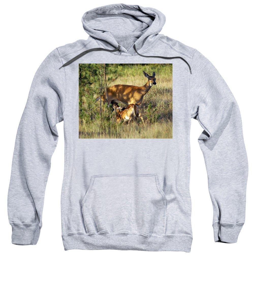 Deer Sweatshirt featuring the photograph Nursing Fawn by Marty Koch