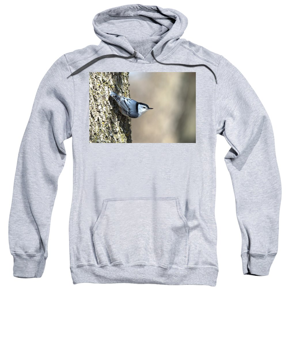 Animal Sweatshirt featuring the photograph Nuthatch by Bonfire Photography