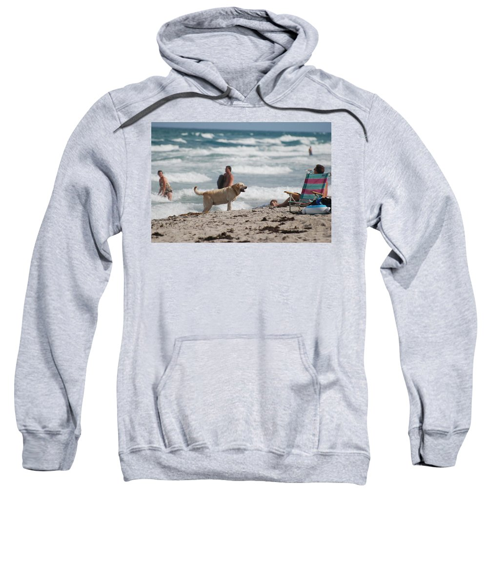 Waves Sweatshirt featuring the photograph Ocean Dog by Rob Hans