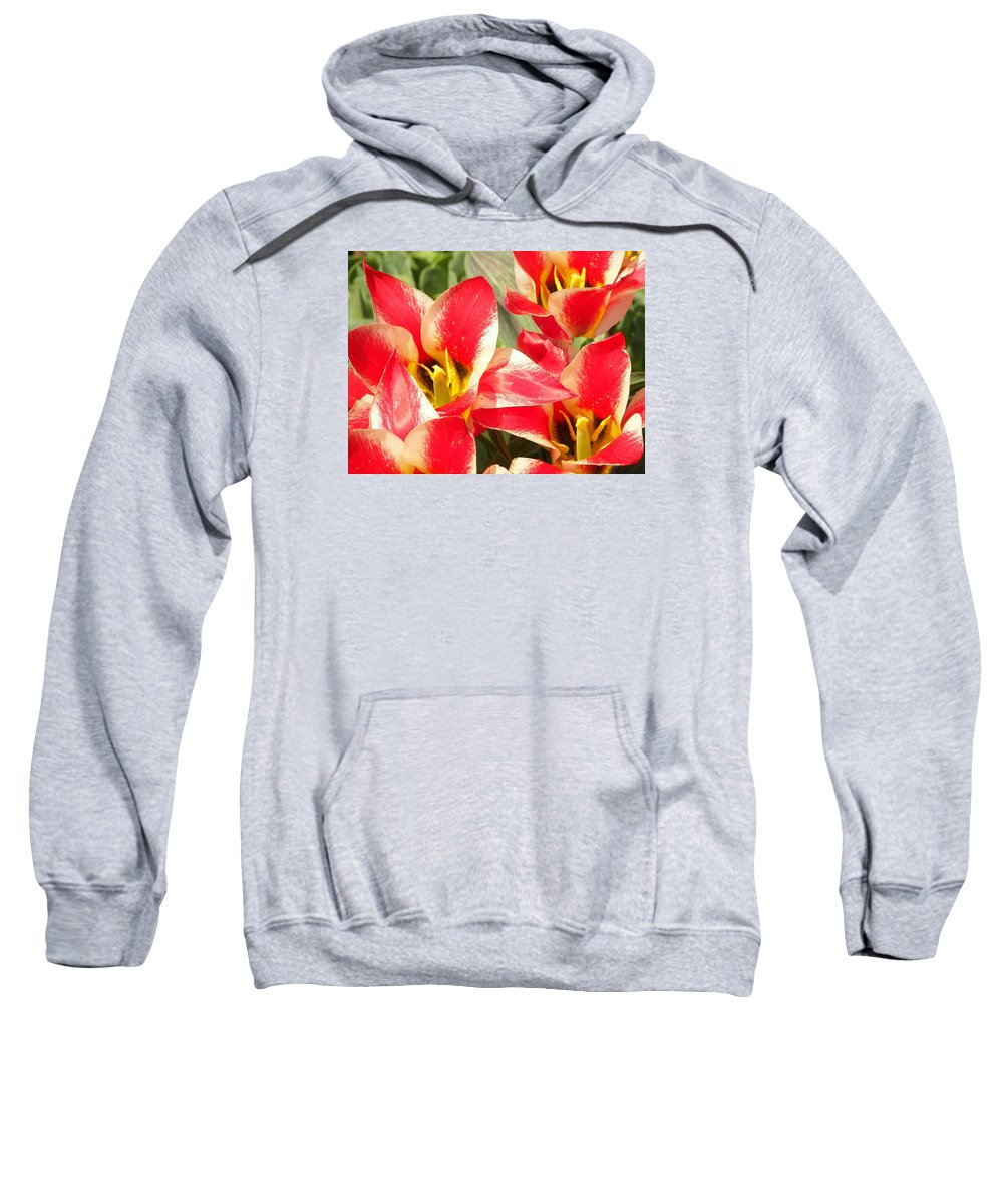 Flowers Sweatshirt featuring the photograph Ochre Army by Judith L Schade