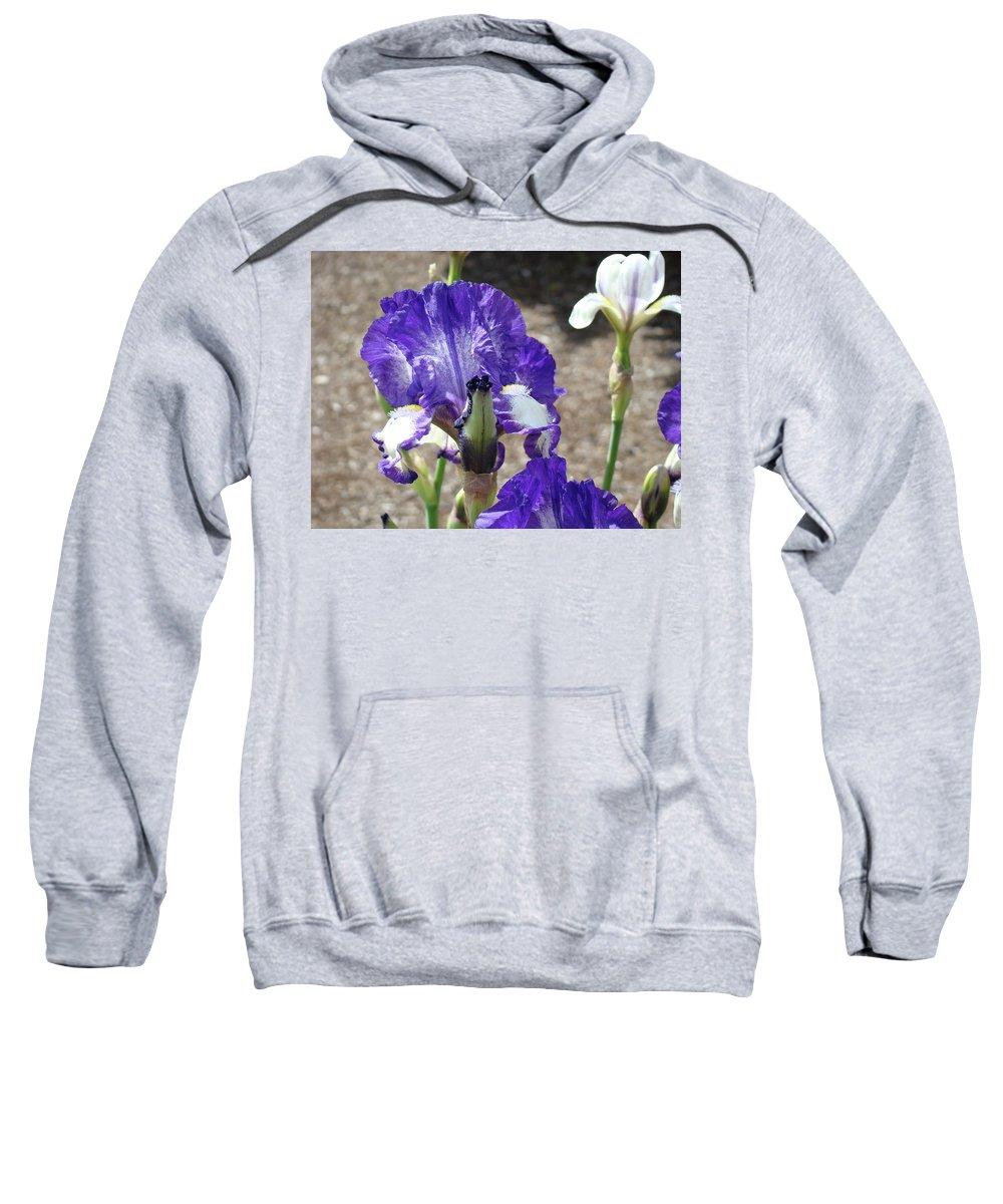 Office Sweatshirt featuring the photograph Office Art Prints Irises Flowers 46 Iris Flower Giclee Prints Baslee Troutman by Baslee Troutman