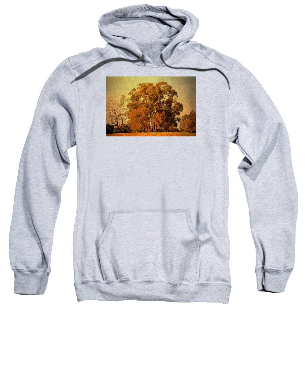 Gum Tree Sweatshirt featuring the photograph Old Gum Tree by Georgiana Romanovna