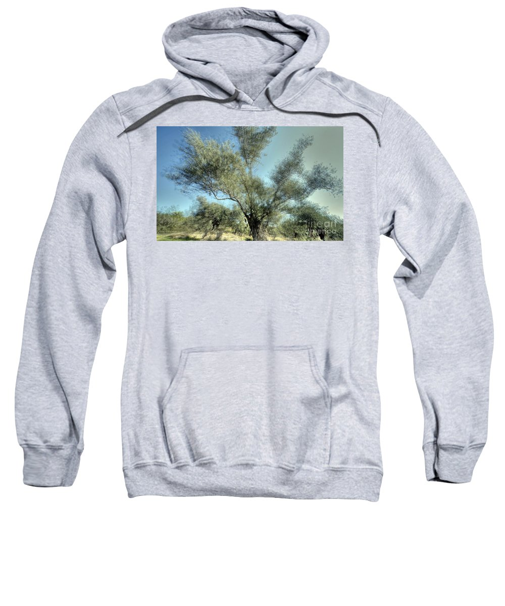 Olive Sweatshirt featuring the photograph Olive Trees by Vladi Alon