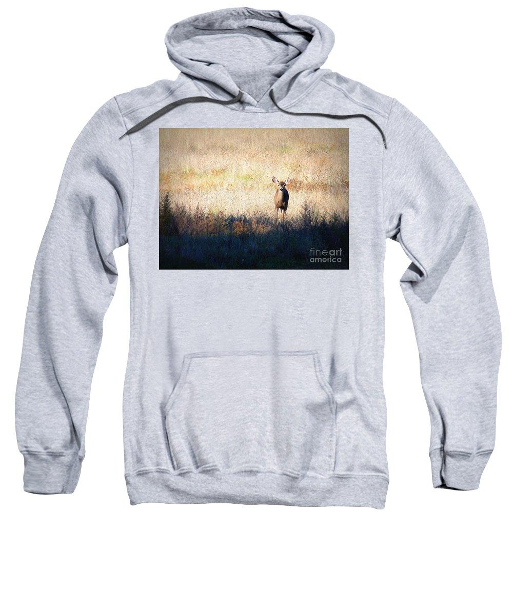 Wildlife Sweatshirt featuring the photograph One Cute Deer by Carol Groenen