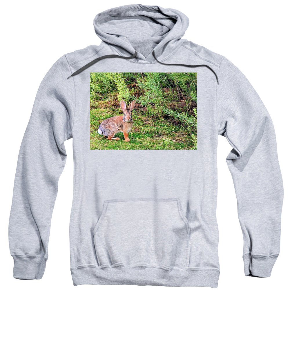 Bunny Sweatshirt featuring the photograph One Hop From The Warren by Kristin Elmquist