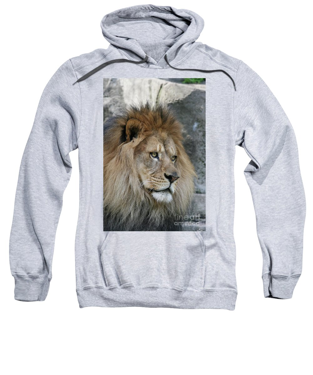 Lion Sweatshirt featuring the photograph Onyo #22 by Judy Whitton