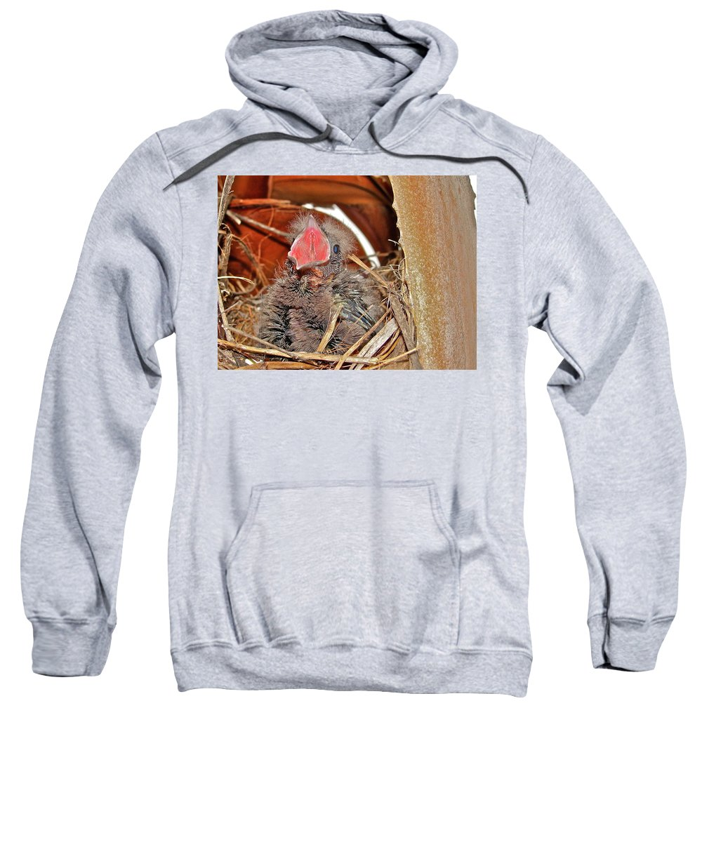 Bird Sweatshirt featuring the photograph Open Wide by Diana Hatcher