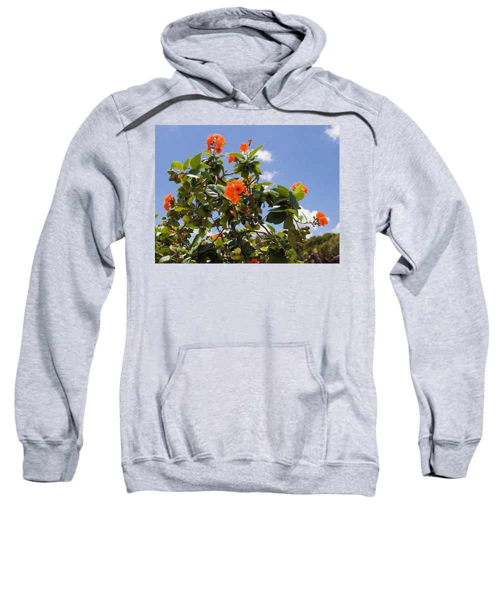 Hibiscus; Rosasinensis; Rosa; Sinensis; Rosa-sinensis; Tree; Bush; Shrub; Plant; Flower; Flowers; Fl Sweatshirt featuring the photograph Orange Hibiscus With Fruit On The Indian River In Florida by Allan Hughes