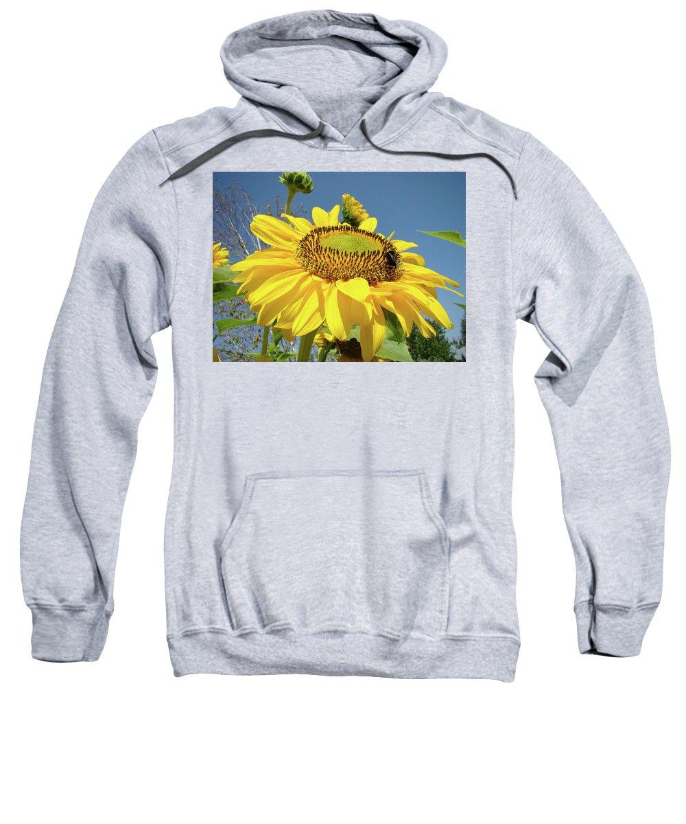 Sunflower Sweatshirt featuring the photograph Oregon Gardens Silverton Sunflower Honeybee Baslee by Baslee Troutman