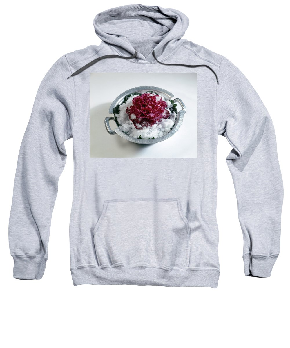 Plant Sweatshirt featuring the photograph Ornamental Cabbage by Stefania Levi