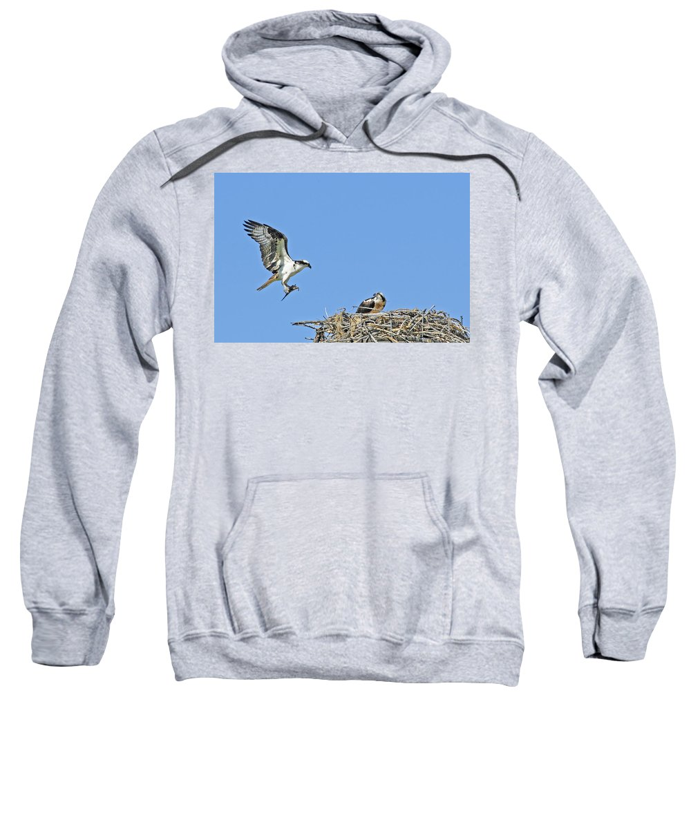 Osprey Sweatshirt featuring the photograph Osprey Brings Fish To Nest by Gary Beeler