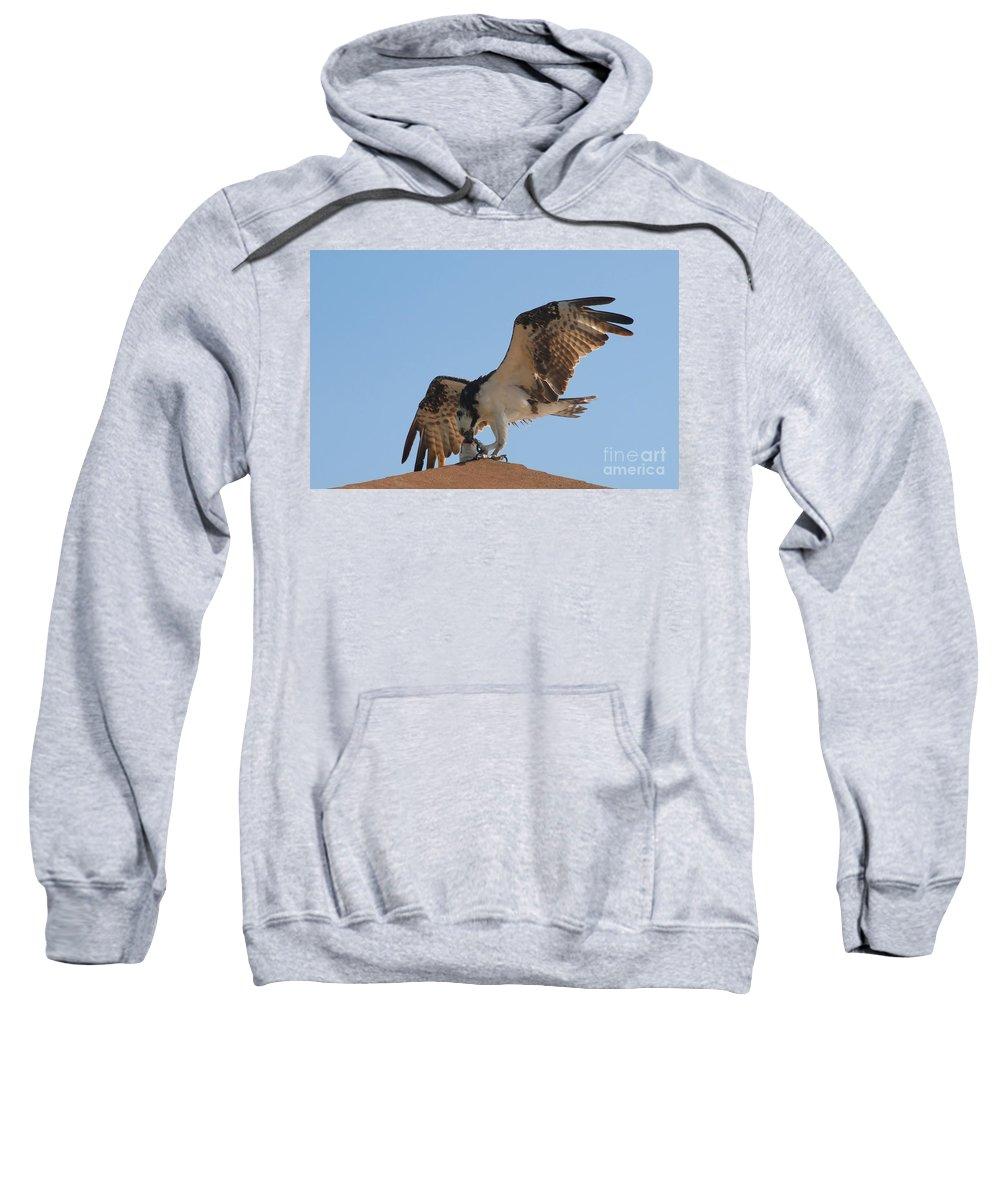 Osprey Sweatshirt featuring the photograph Osprey by David Lee Thompson