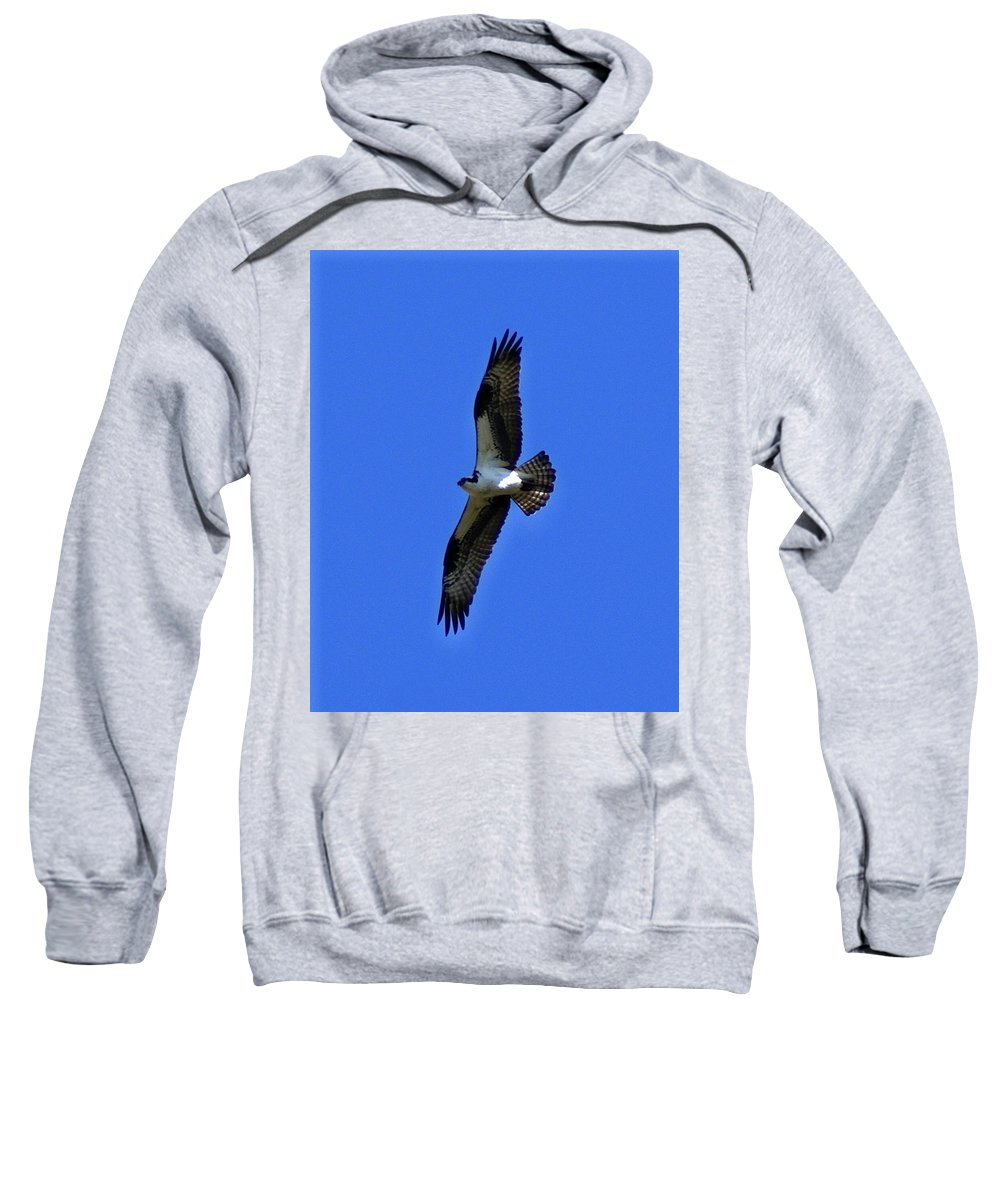 Birds Sweatshirt featuring the photograph Osprey In Flight 1 by Ben Upham III