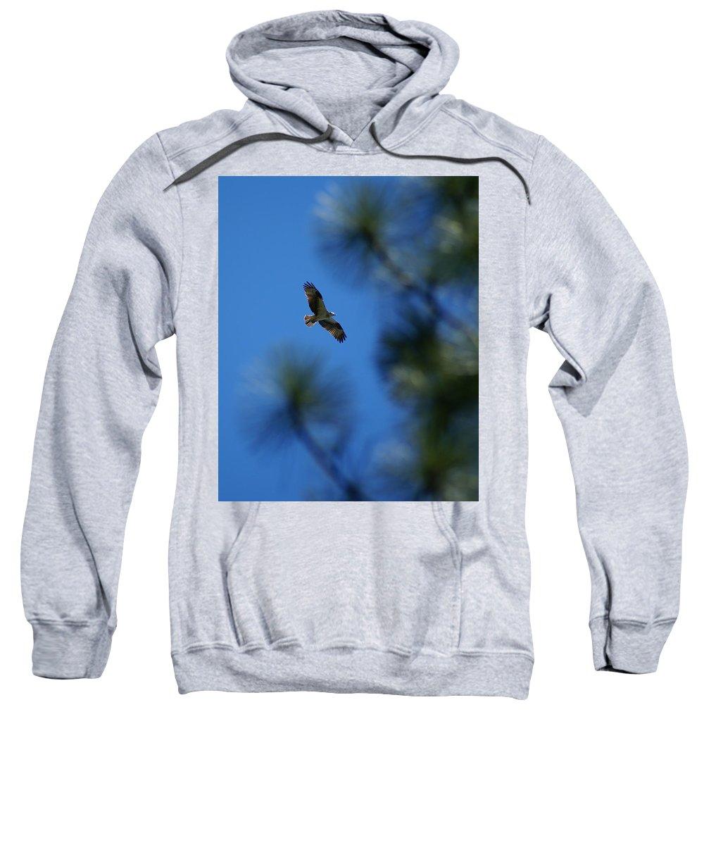 Birds Sweatshirt featuring the photograph Osprey In Flight 8 by Ben Upham III