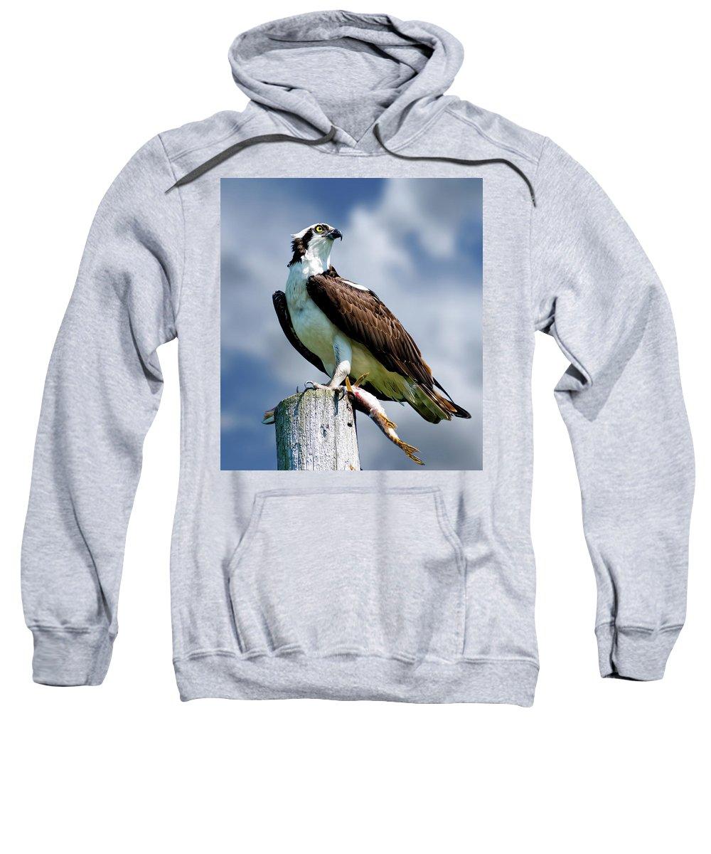Osprey Sweatshirt featuring the photograph Osprey by Michael Cummings