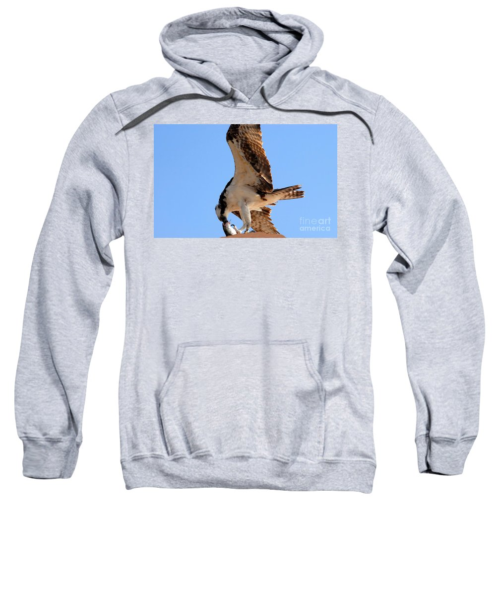 Osprey Sweatshirt featuring the photograph Osprey's Catch by David Lee Thompson