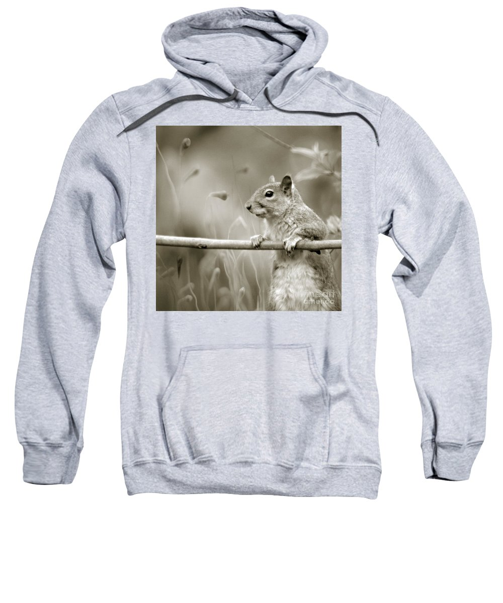 Squirrel Sweatshirt featuring the photograph Over The Fence In Black And White by Angel Ciesniarska