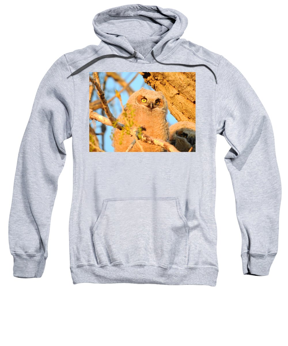 Sun Sweatshirt featuring the photograph Owlet In A Spring Sunrise by Nicole Belvill
