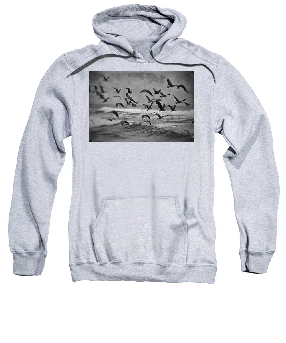 California Sweatshirt featuring the photograph Pacific Gulls by Laura Macky