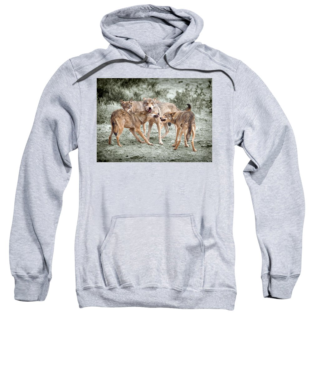 Wolf Sweatshirt featuring the photograph Pack Dispute by Mal Bray