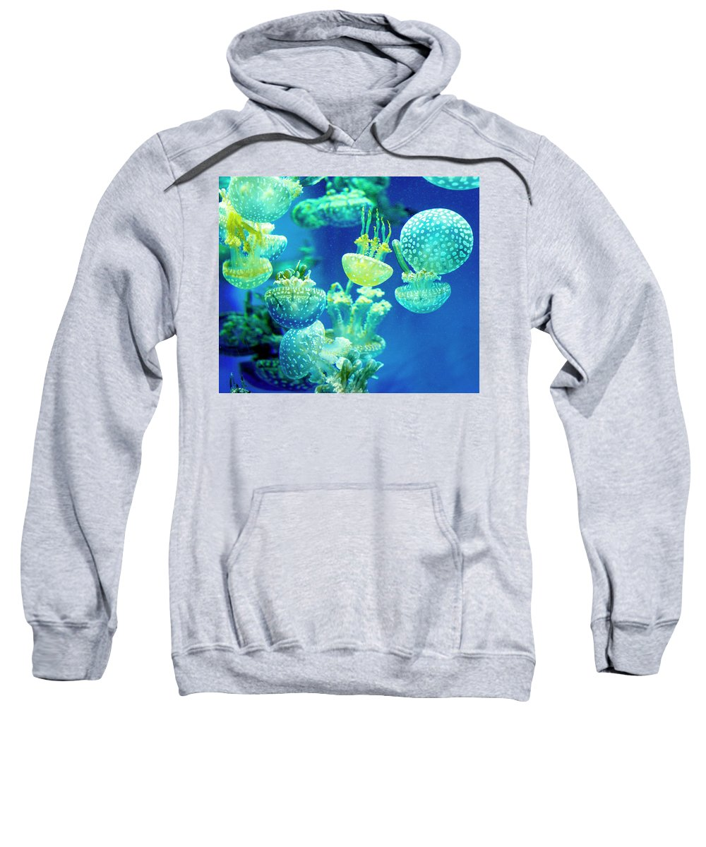 Aquarium Of The Pacific Sweatshirt featuring the photograph Party In The Lagoon by Velda Ruddock