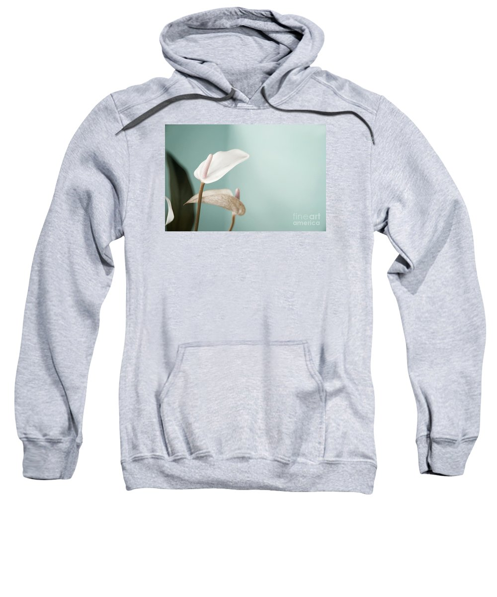 Flower Sweatshirt featuring the photograph Pastel Color Of Anthurium Flower by Dania Photo