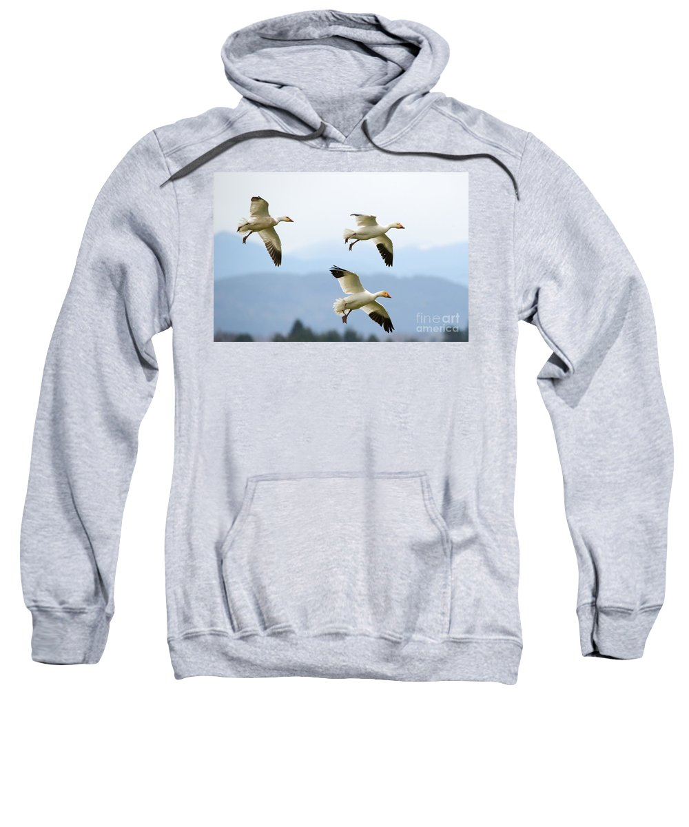 Snow Geese Sweatshirt featuring the photograph Pattern Of Three by Mike Dawson