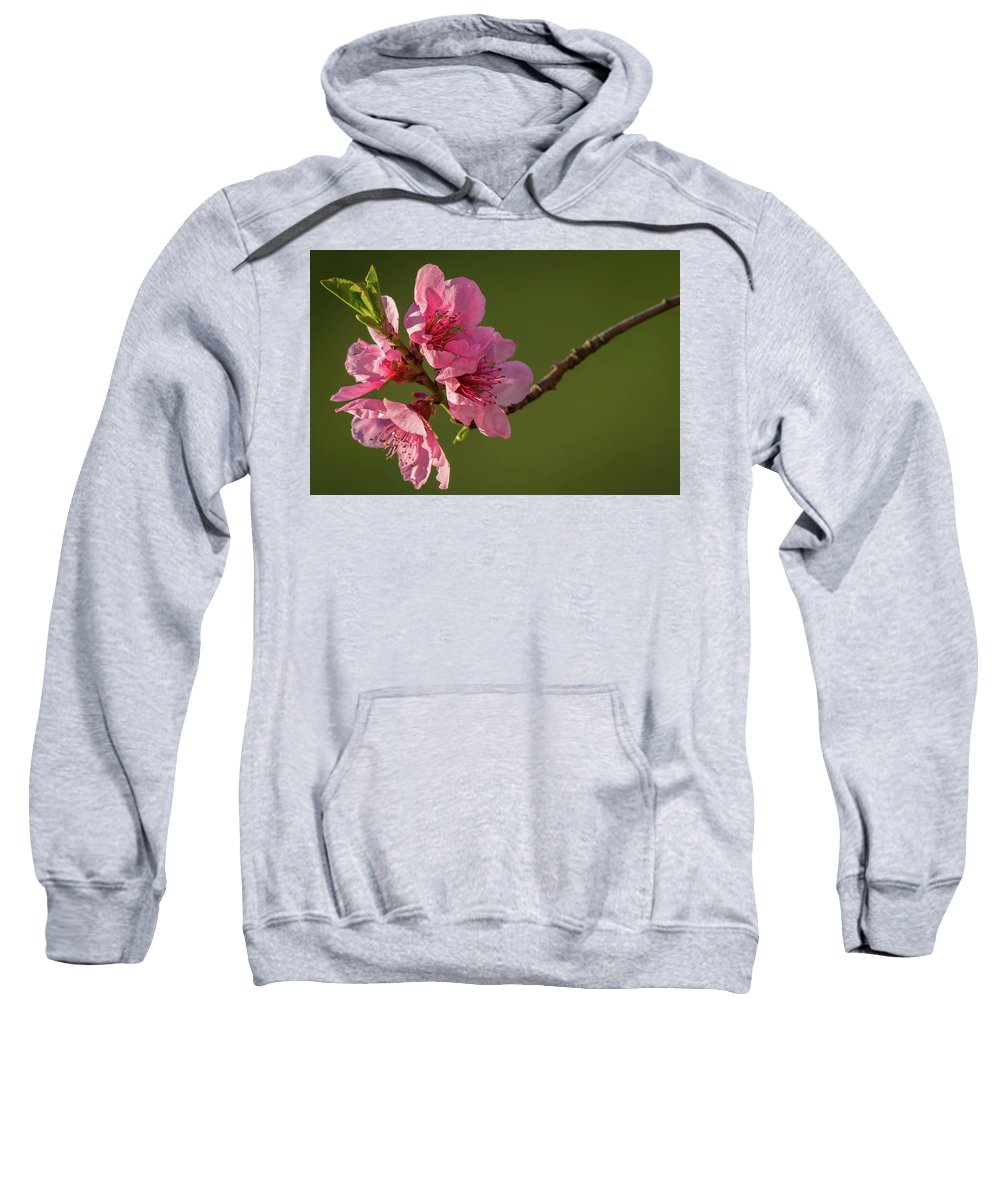 Peach Sweatshirt featuring the photograph Peach Blossom by Stefan Rotter