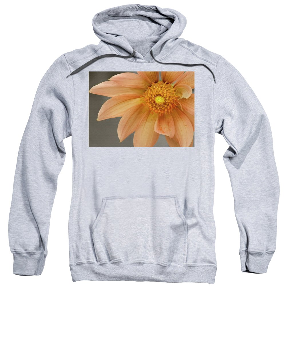 Floral Sweatshirt featuring the photograph Peach Dahlia by Sharon Foster
