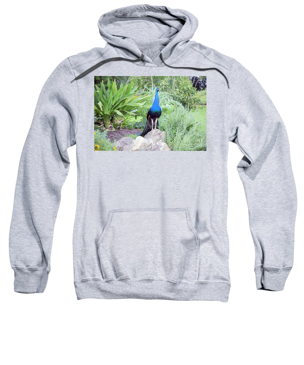 Landscape Sweatshirt featuring the photograph Peacock Landscape Louisiana by Chuck Kuhn