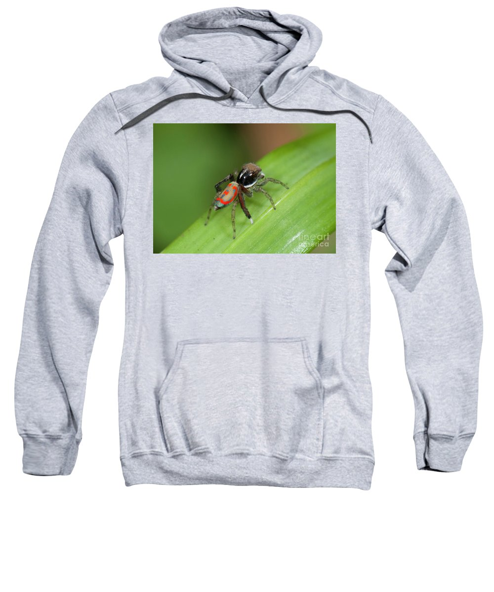Peacock Spider Sweatshirt featuring the photograph Peacock Spider by Genevieve Vallee