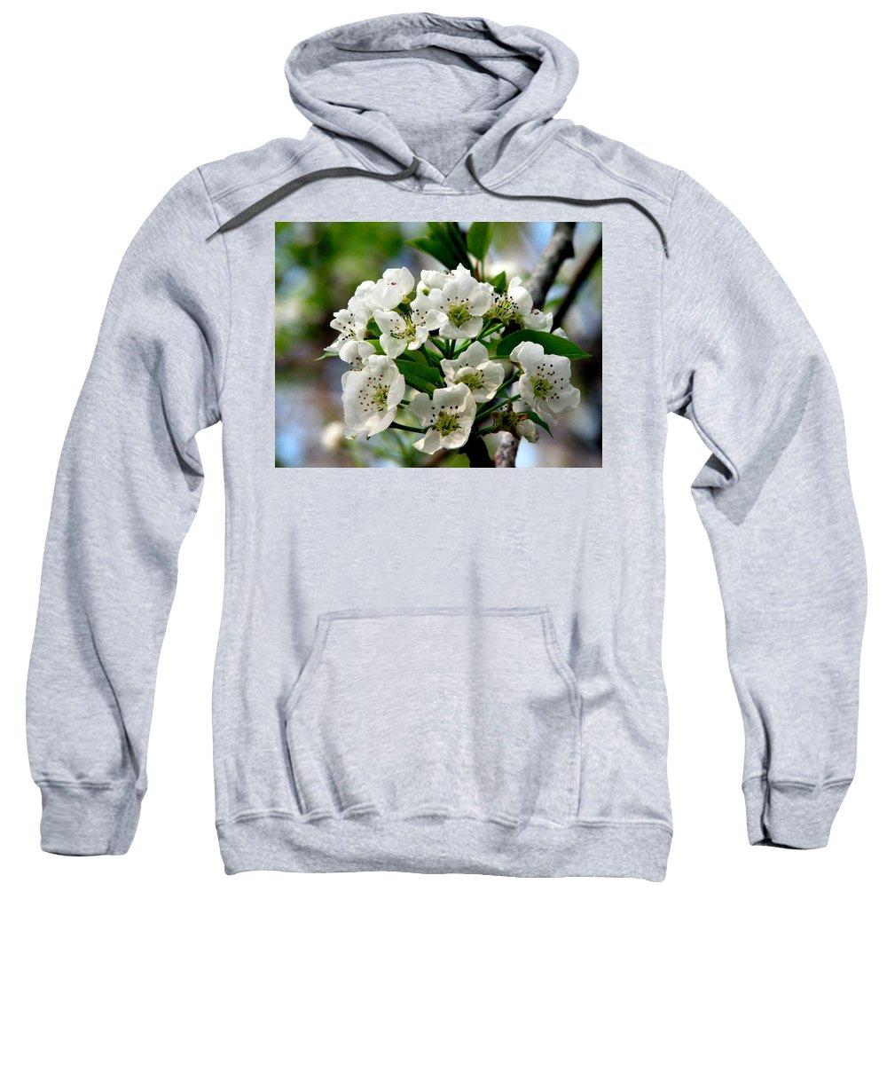 Pear Tree Blossum Sweatshirt featuring the photograph Pear Tree Blossoms 1 by J M Farris Photography