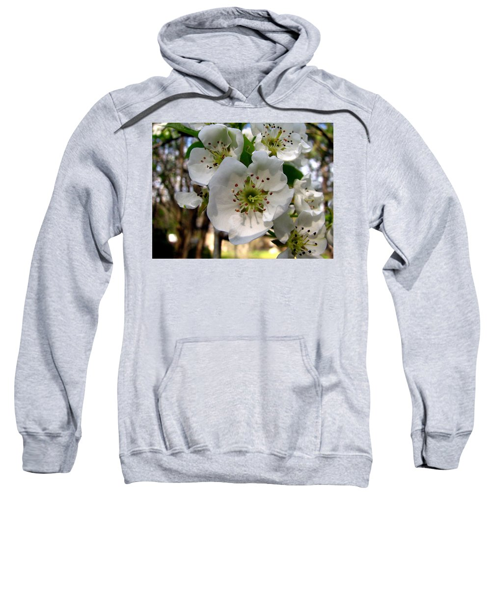 Pear Tree Blossum Sweatshirt featuring the photograph Pear Tree Blossoms 3 by J M Farris Photography