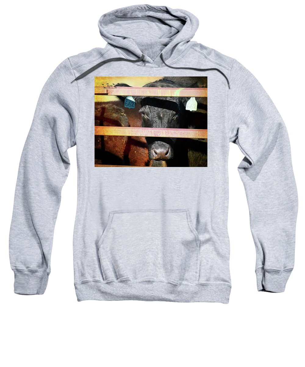 Cow Sweatshirt featuring the photograph Peek-a-boo by Rebecca Reyes
