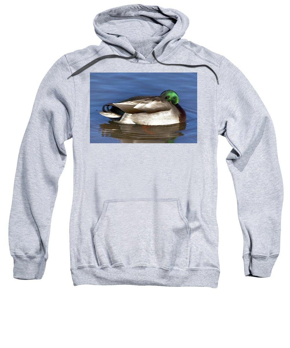 Duck Sweatshirt featuring the photograph Peek A Boo by Robert Pearson