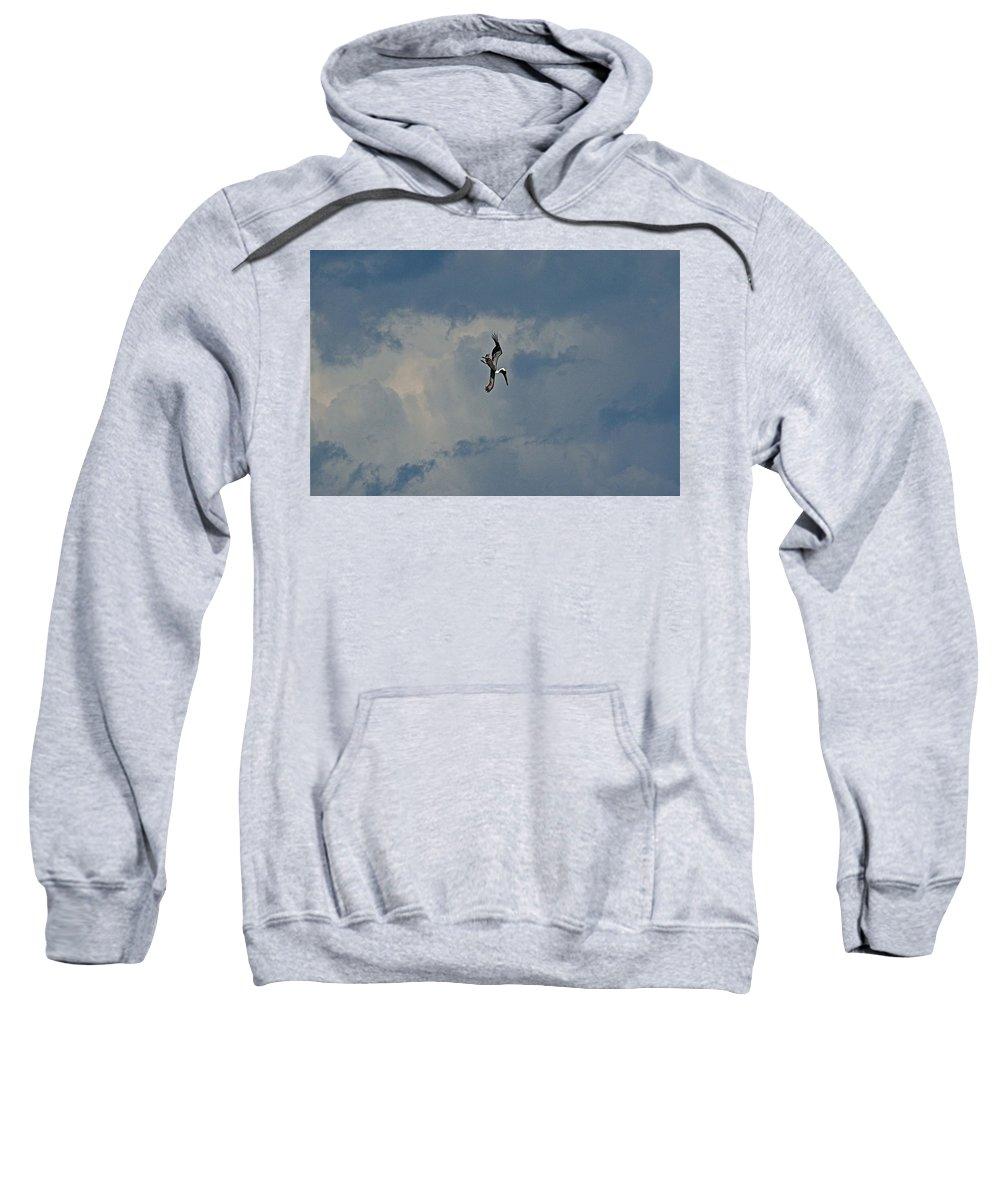 Bird Sweatshirt featuring the photograph Pelican Sky Dive by Colleen Fox