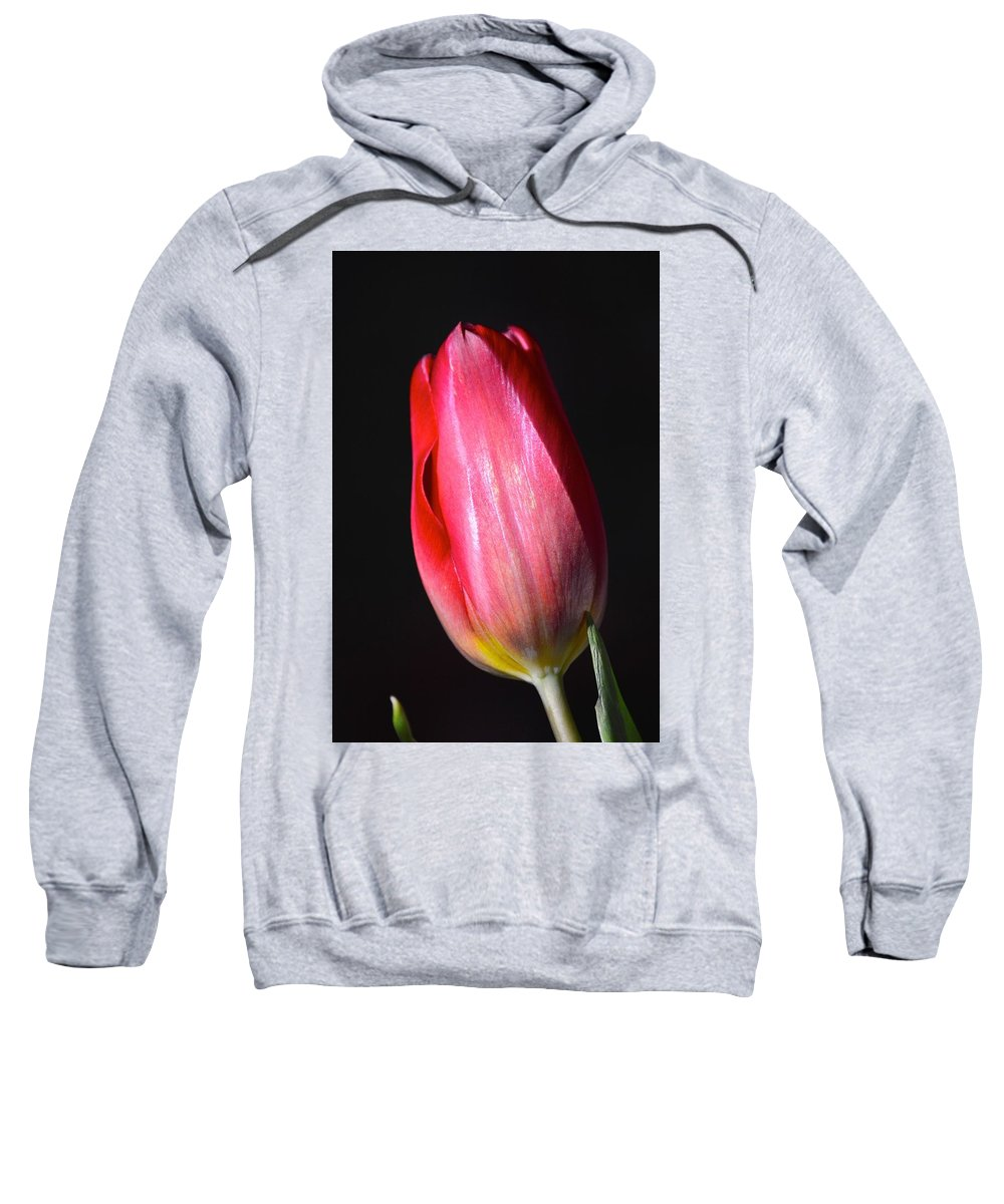 Tulip Red Nature Maine Longlife Arts Flower Sweatshirt featuring the photograph Perfect Love by Sheila Price