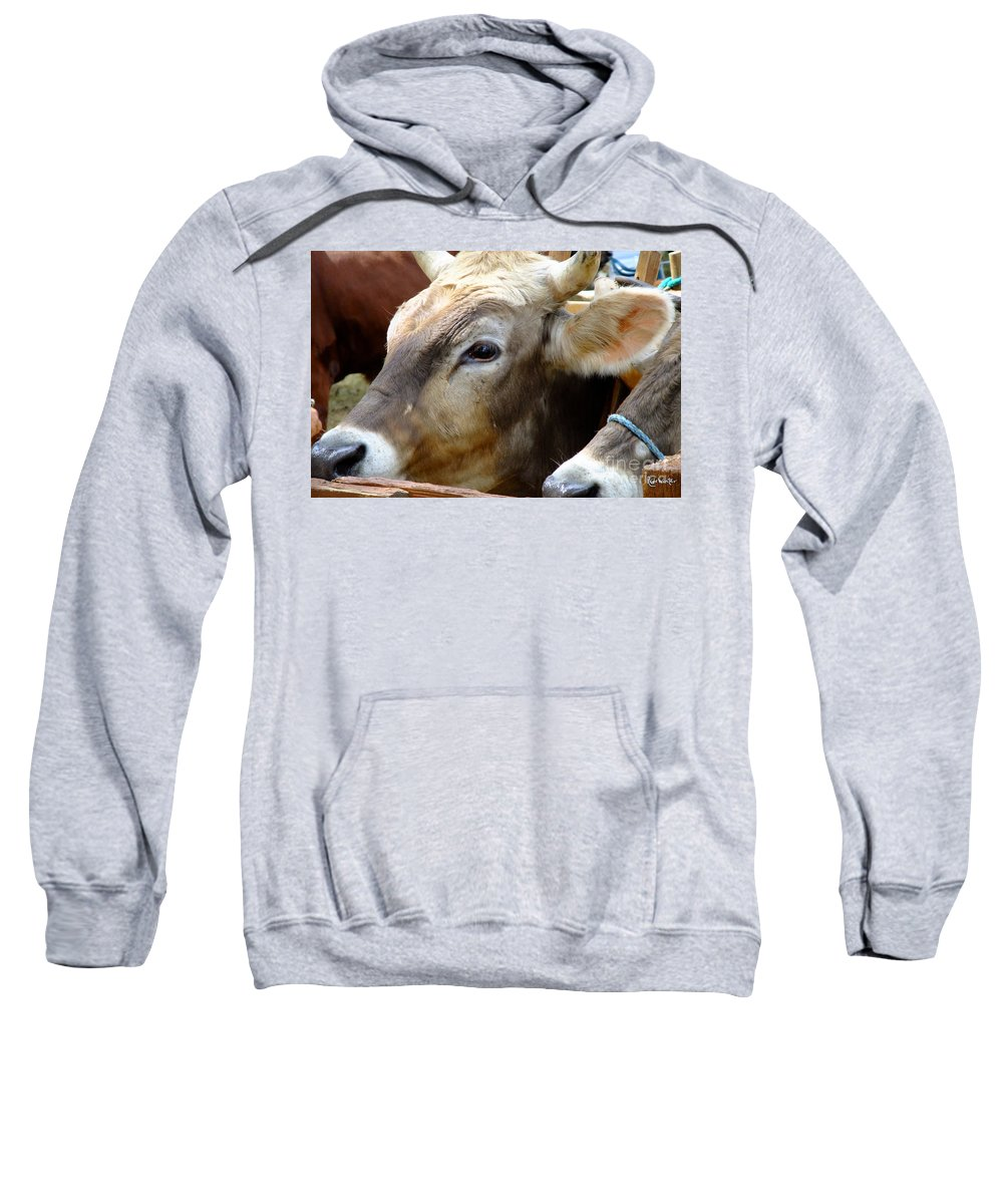 Animals Sweatshirt featuring the photograph Performance Anxiety by RC DeWinter