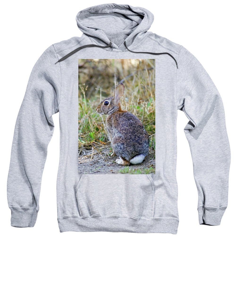 Bunny Sweatshirt featuring the photograph Peter Cottontail by Randall Ingalls