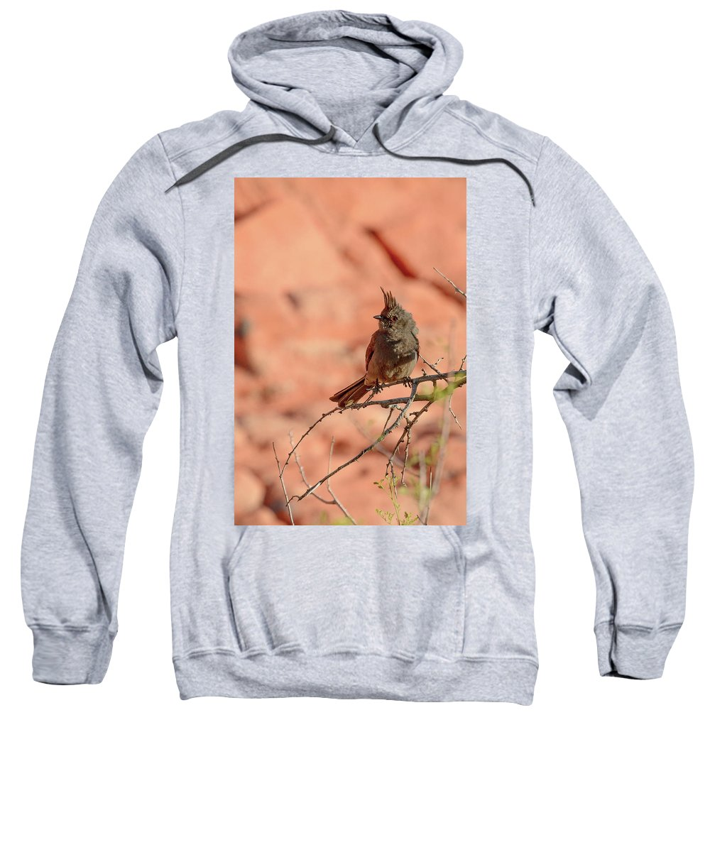 Female Sweatshirt featuring the photograph Phainopepla by Richard Eastman