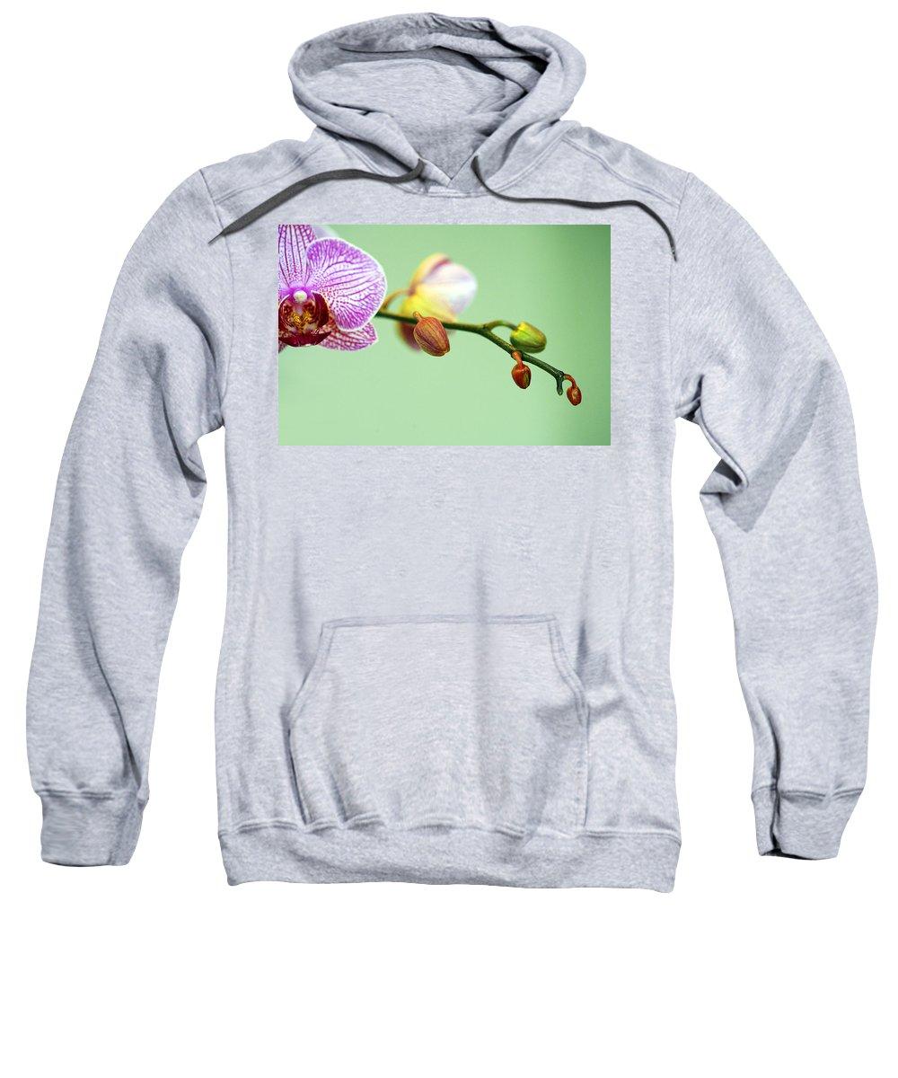 Phalaenopsis Sweatshirt featuring the photograph Phalaenopsis by Marilyn Hunt