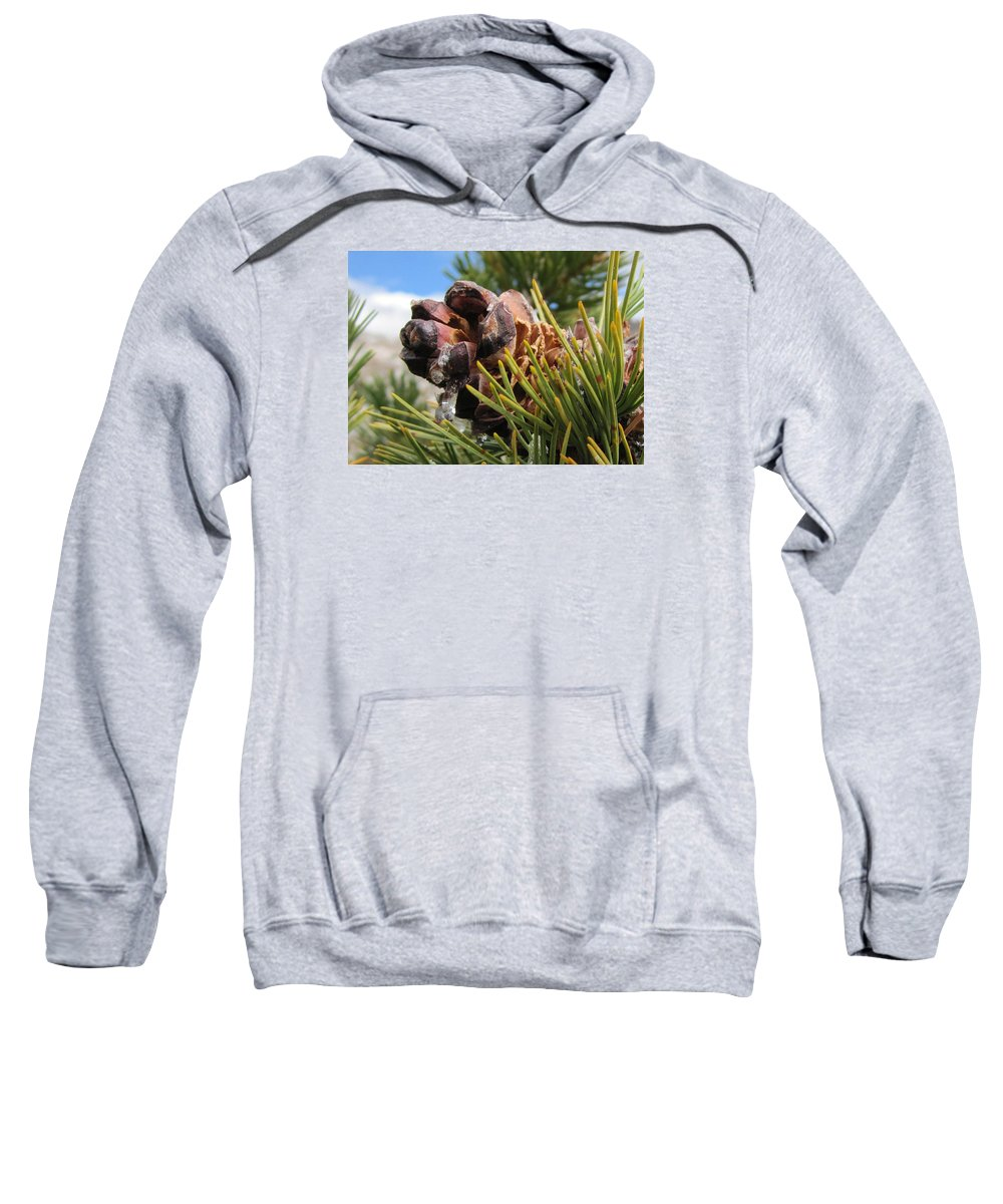 Sap Sweatshirt featuring the photograph Pinecone With Dripping Sap by Brenda Smith
