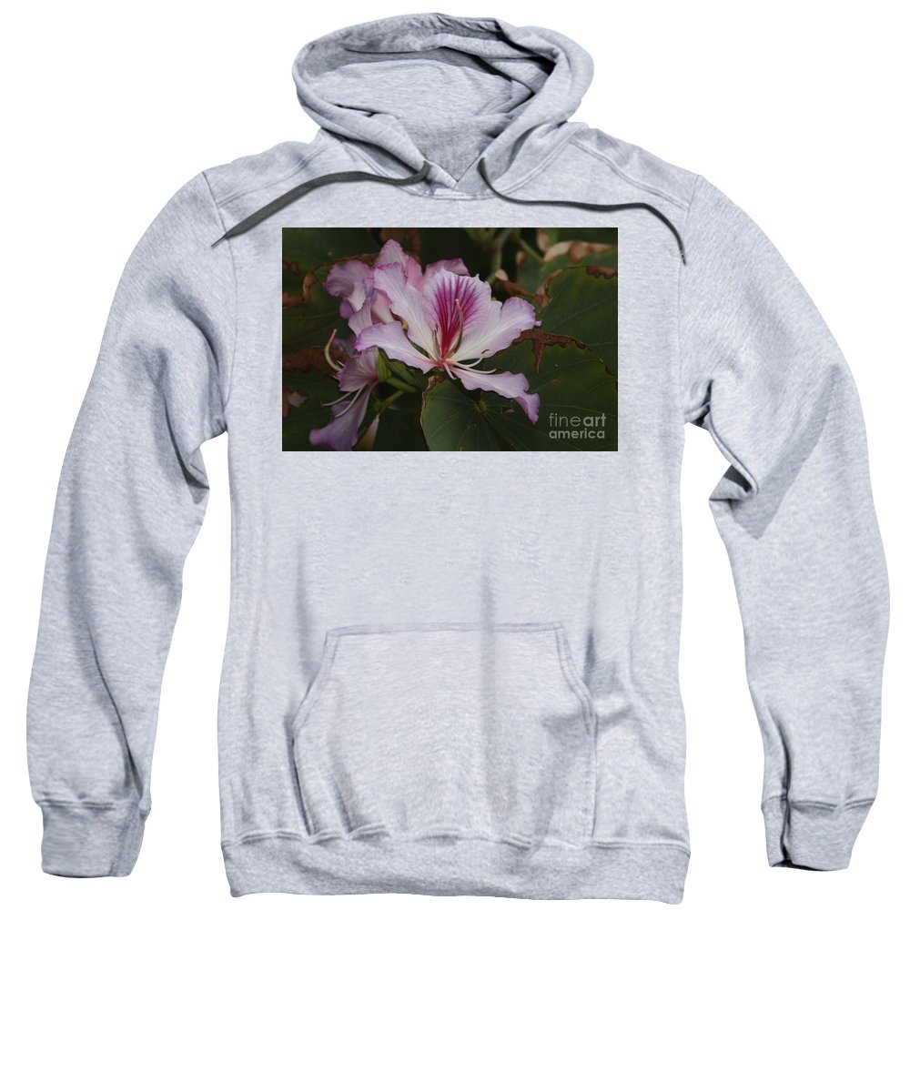 Pink Sweatshirt featuring the photograph Pink Bauhinia Flower by Richard Riley