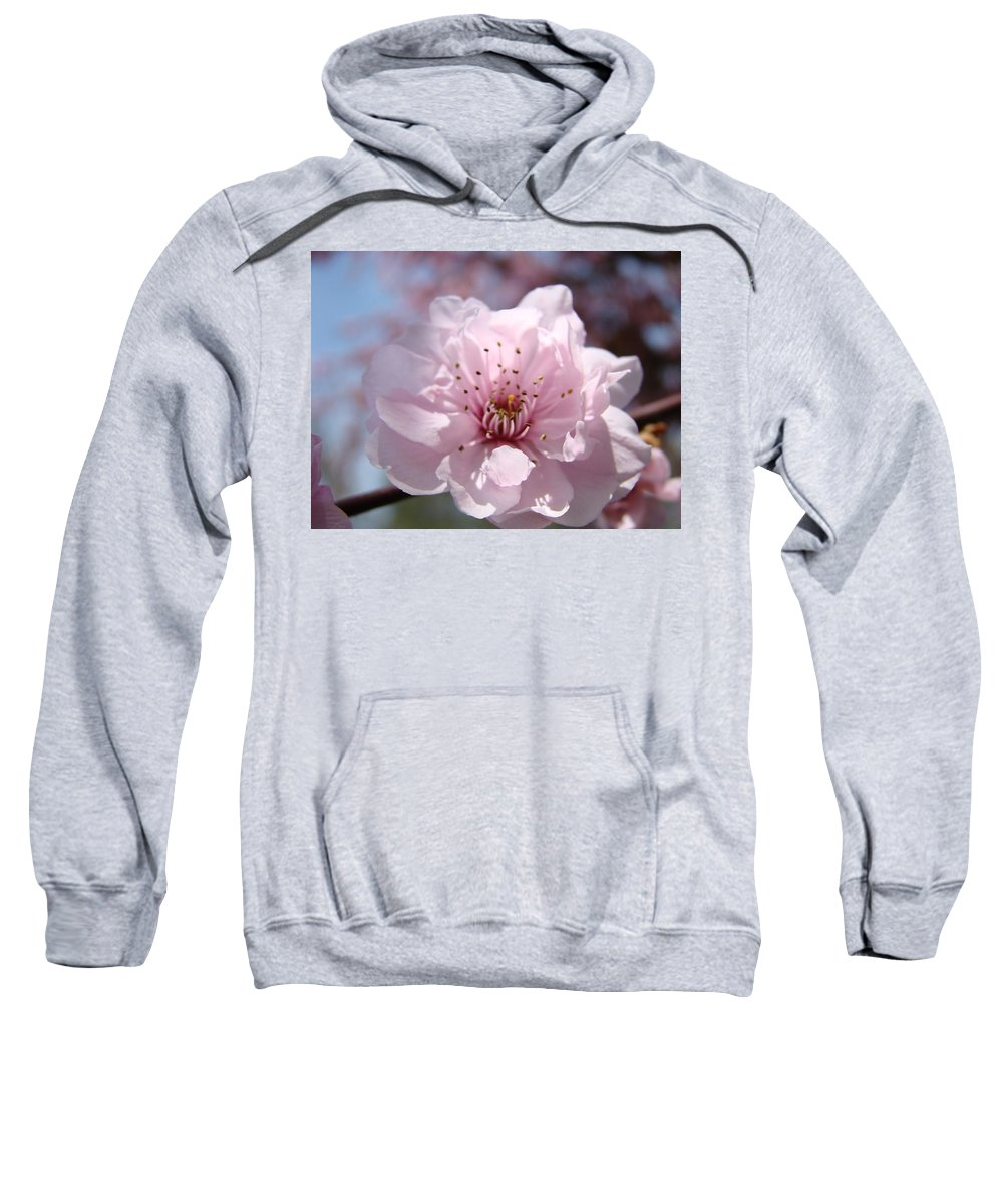 �blossoms Artwork� Sweatshirt featuring the photograph Pink Blossom Nature Art Prints 34 Tree Blossoms Spring Nature Art by Baslee Troutman